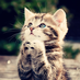 alittlecat