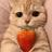 cat404